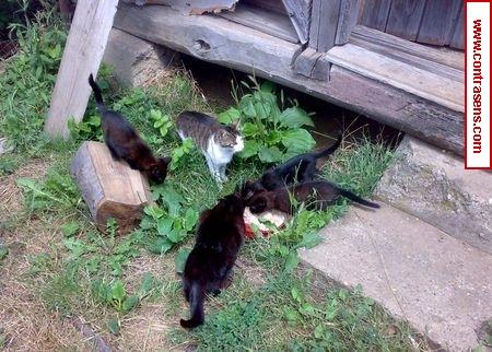 Cats farm